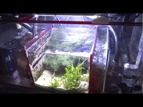 How To Setup A Sump Refugium