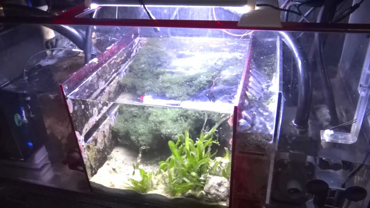 How To Setup A Sump Refugium Youtube