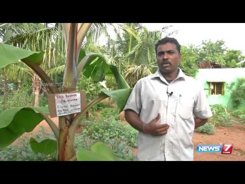 """How to grow """"Red Banana"""" tree @ your Home 