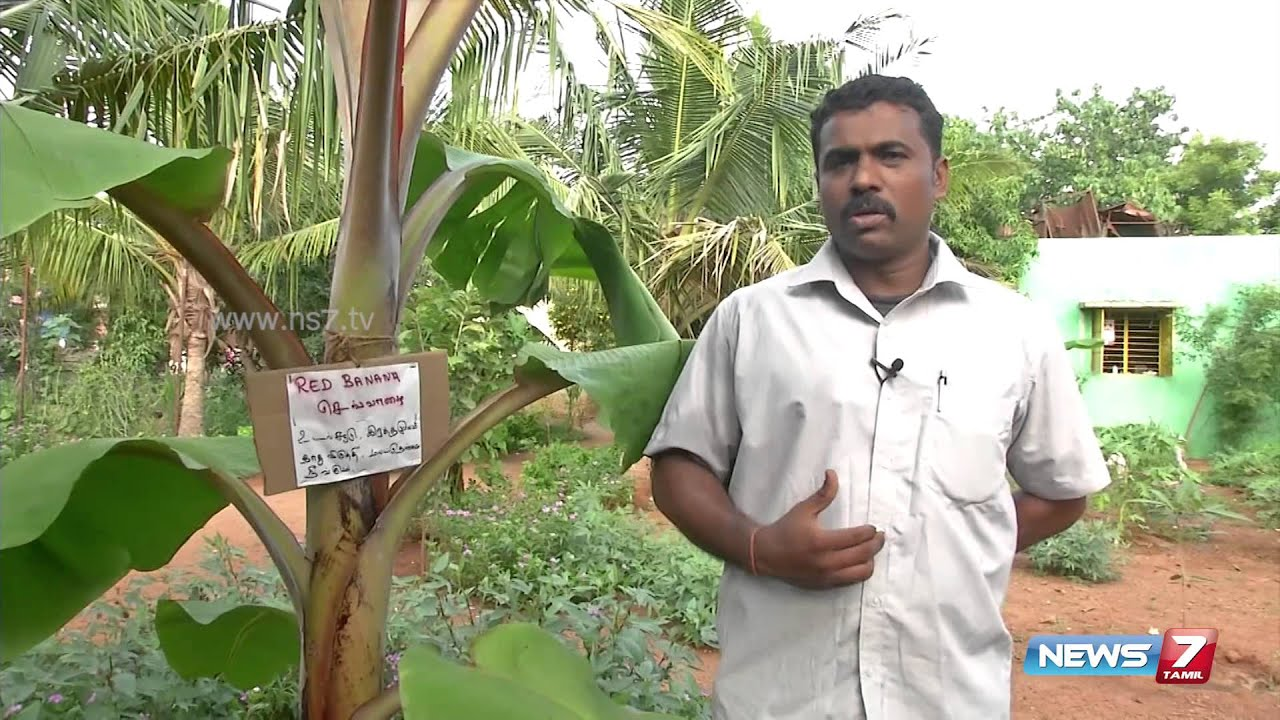 grow a tree for each house in tamil Learn how to grow guava tree from smell which spreads quickly in the house iron sulphate each year always water your guava plant after fertilizing.