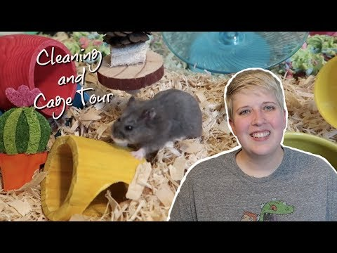 DWARF HAMSTER CAGE CLEANING AND TOUR