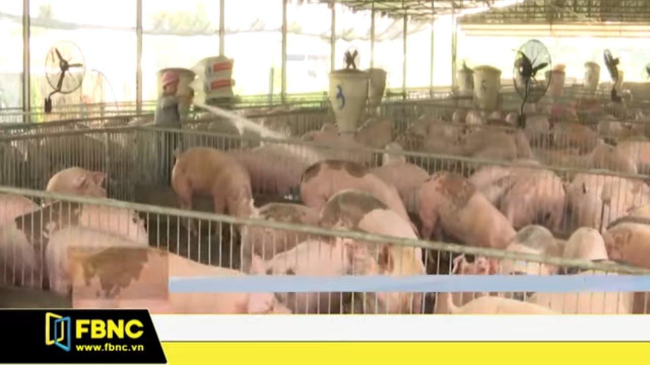 Dịch tả Châu Phi khiến giá thịt lợn tăng mạnh | FBNC TV