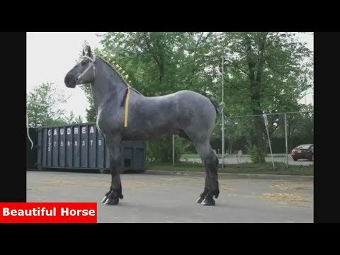 """Funny Horse Videos Compilation """"Little Pony in Real Life"""" #5 - Beautiful Horse"""