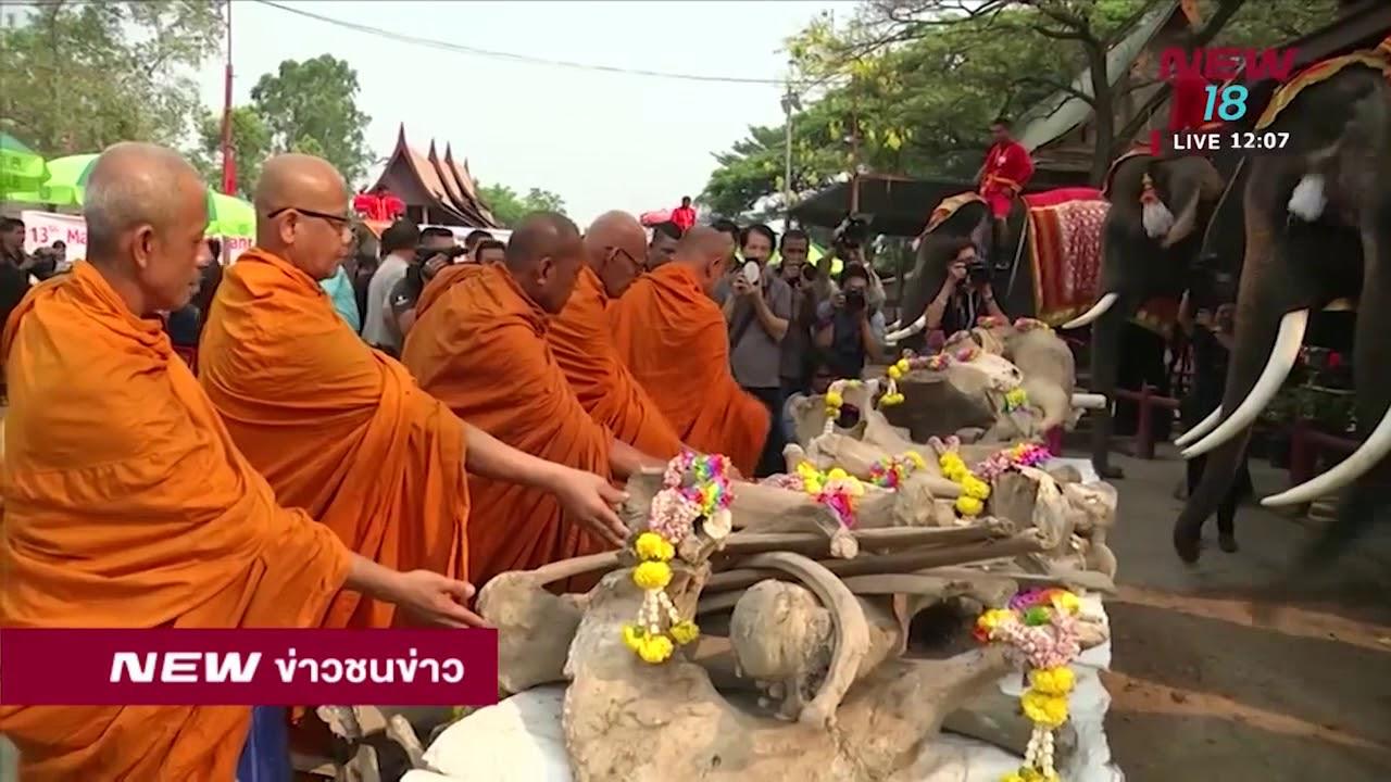 สวนนงนุชนำช้างแสนรู้ตักบาตรวันช้างไทย | ข่าวชนช่าวเที่ยง | 13 มี.ค.61 | NEW18 #1