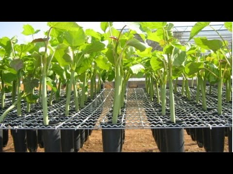 Curso Produção de Mudas Frutíferas - Viveiros em Estufa - Cursos CPT