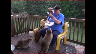 2020 06 19 Friday Night Raccoons
