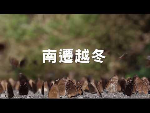 2017國道紫斑蝶生態保育影片