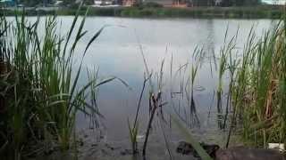 28.08.14 Рыбалка в Подмосковье, река Вьюнка, г. Железнодорожный, травля карася.