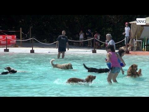 Resort Canino Can Janè El Primer Parque Acuático Para Perros De España Youtube