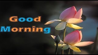 Latest Good Morning wishes, SMS, greetings, Whatsapp Video message 4