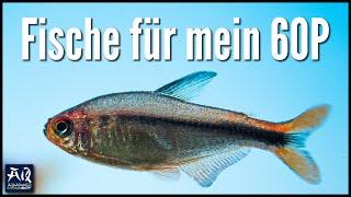 6 MÖGLICHE FISCHE FÜR MEIN AQUARIUM | AquaOwner