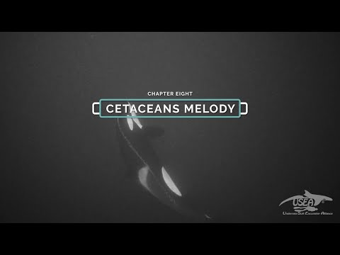 THE CETACEANS MELODY