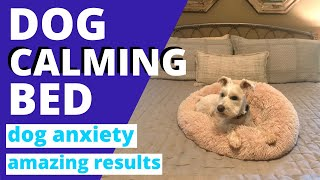We Got A Calming Bed For Our Dog With Anxiety ~ White Miniature Schnauzer