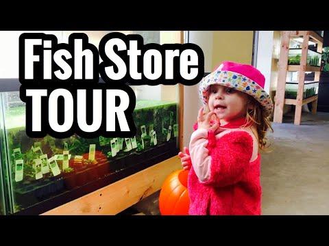 Quality Aquatics Of Minnesota Fish Store Tour