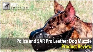 Great Dane, Cane Corso And Other Dogs Wearing Leather Dog Muzzle
