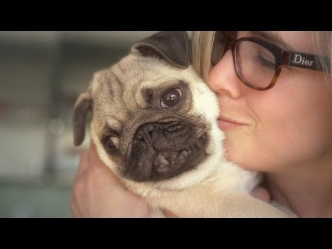 Facts That Prove Pugs Are The Best Dogs Ever