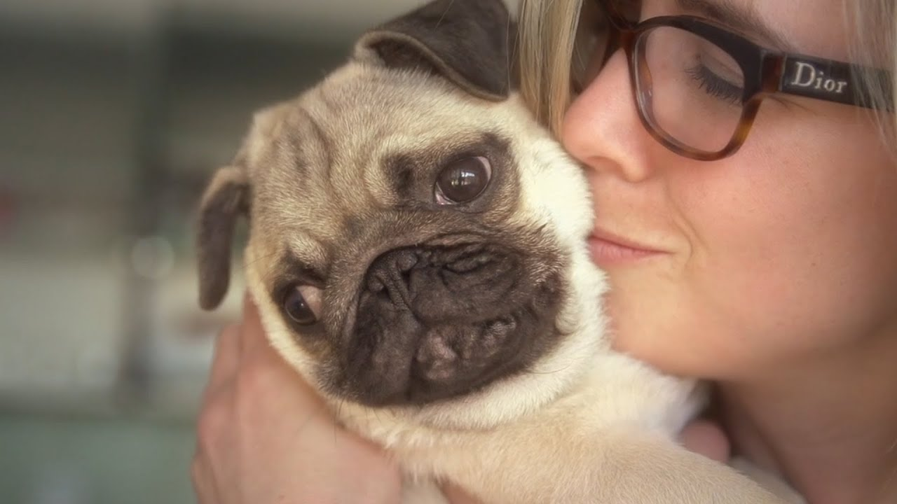 5 Reasons Pugs Are Good Dogs for Seniors