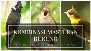 1 JAM FULL NEMBAK! Mp3 Suara Masteran Burung CILILIN SIKATAN LONDO KAPAS TEMBAK!