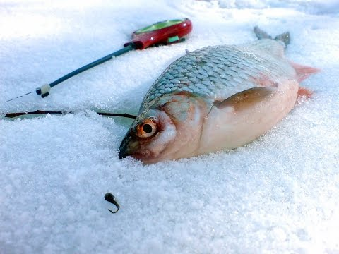 ловля краснопёрки зимой на водохранилище