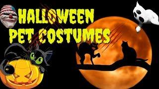 Halloween Pet Costumes 2019 - Funny Pets In Halloween Costumes – Halloween Cat And Dog Costumes