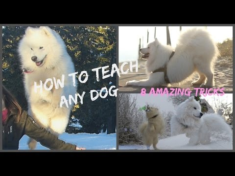 || Dog Tricks Tutorial : 8 EASY & IMPRESSIVE dog tricks