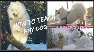 || Dog Tricks Tutorial : 8 EASY & IMPRESSIVE dog tricks