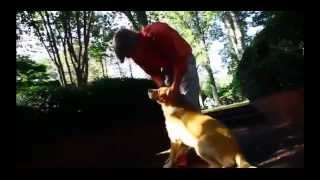Fort Collins Dog Trainer Golden Retriever Dixie Obedience Off Leash Control