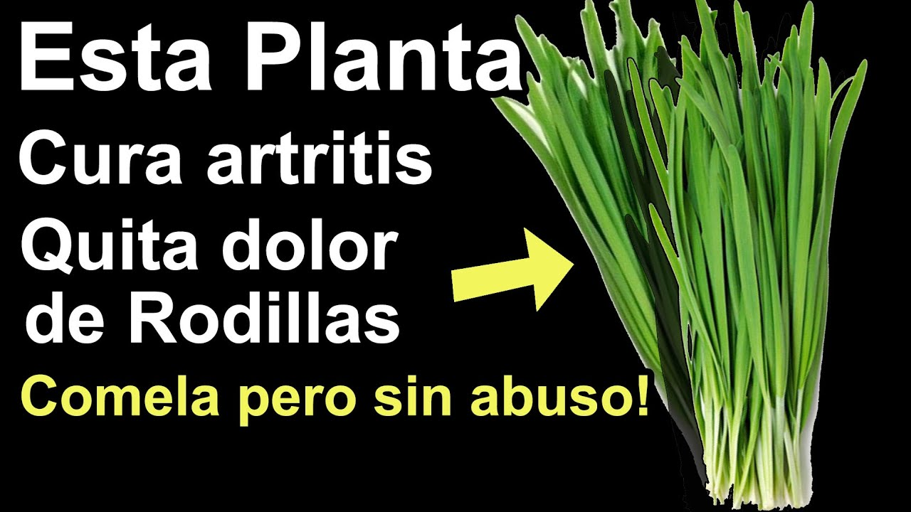 Comí esta planta ASÍ y se desaparecieron dolor de rodillas y artritis