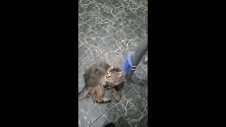 Трехлапый котенок на улице.