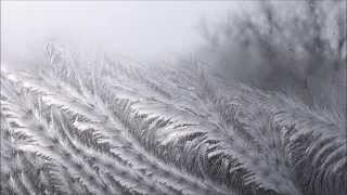 Frost Patterns Melting in the Sun