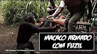 Macaco armado com fuzil