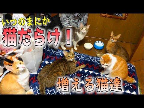 朝起きたら次々と現れる猫達に気がつけば包囲されていました…
