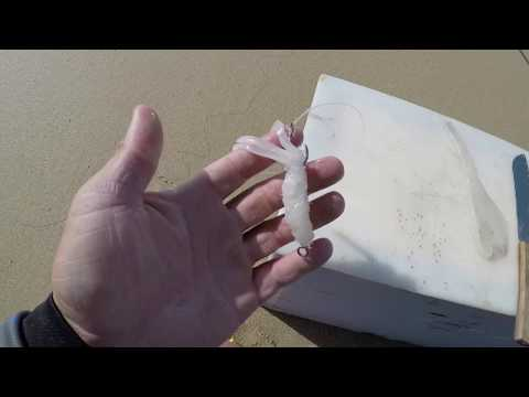 How To Make The Perfect SQUID Bait !!!! Fishing The Beaches Of Port Elizabeth. HD
