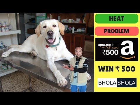 Pet Care - Female Dog Heat Problem - Bhola Shola