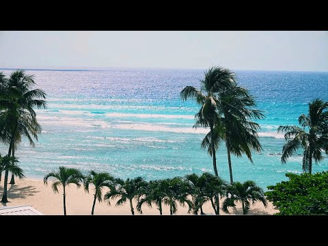 Moving To Barbados During COVID (Vlog #1 Of My Barbados Digital Nomad Journey)