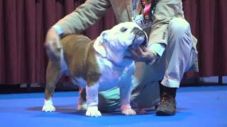 Ladies Kennel Association 2016 - Utility group FULL