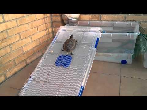 Como hacer una tortuguera casera doovi for Tortuguero casero