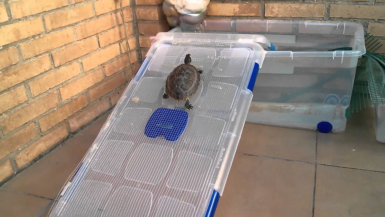 Mi tortuga entrando en su tortuguera youtube for Imagenes de estanques caseros