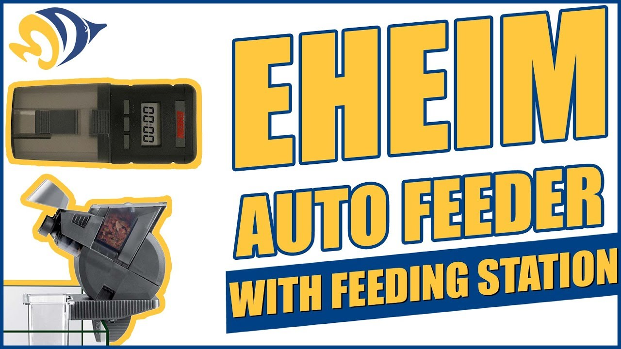 Eheim Auto Feeder With Feeding Station What You Need To Know Youtube