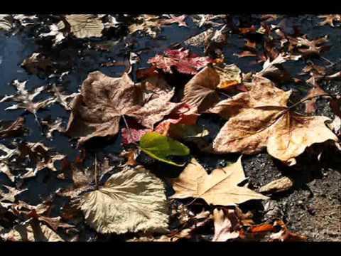 malu hojas secas