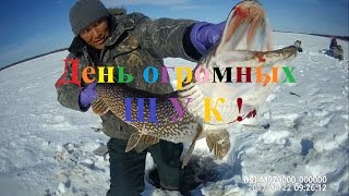 Fishing  from Yakutia. Day big fish!!!