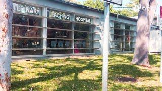 University Veterinary Teaching Hospital Sydney walking tour