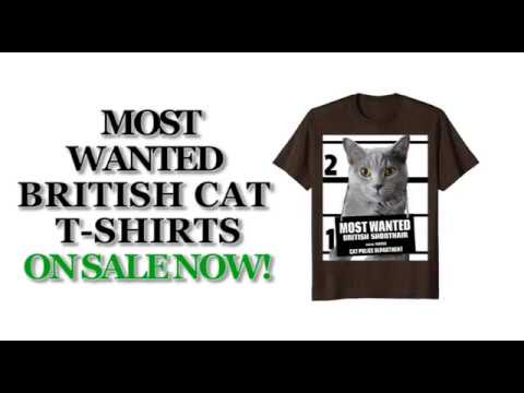 Most Wanted British Shorthair Cat Cute Funny T shirt - Men's, Women's, Kid's - Brown, Olive, Heather
