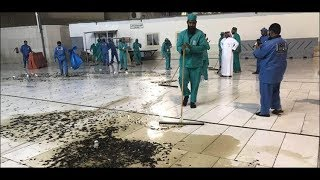 meccas-grand-mosque-plagued-by-swarm-of-locusts
