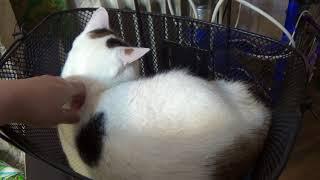 Кошка спит в велосипедной корзинке
