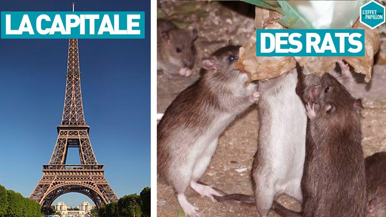 Download LA CAPITALE DES RATS (France) - L'Effet Papillon