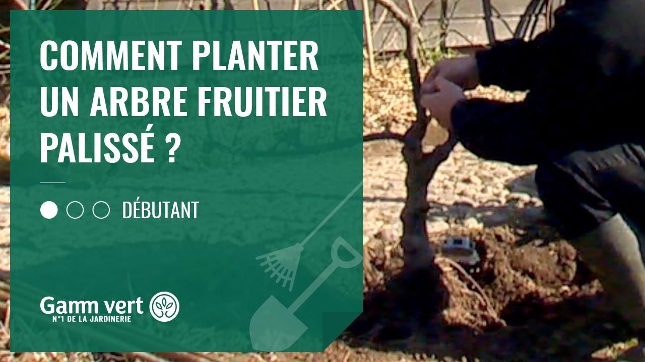 TUTO Comment planter un arbre fruitier palissé ? - Jardinerie Gamm vert - YouTube