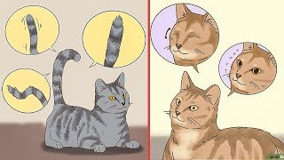 10 signs to understand your cat behavior