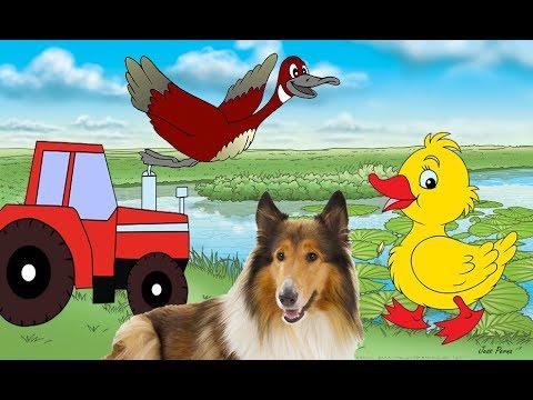 Картинки по запросу кто как умеет животные