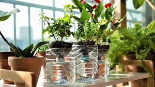 페트병 자동급수로 식물 편하게 키우기